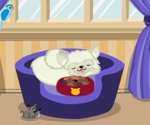 Cat Breeder