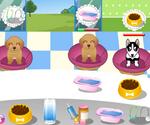 Doggy Shelter
