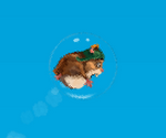 Hamster Qui Vole