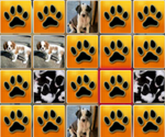 Matching Puppies