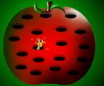 Ver De Pomme